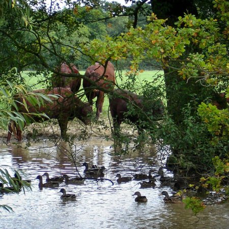 Wildlife, Gabriels Farm Camping and Carvanning Site in Kent
