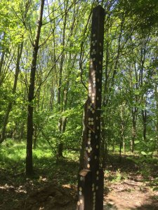 Spooky Woods Playground, , Gabriels Farm Camping and Carvanning Site in Kent