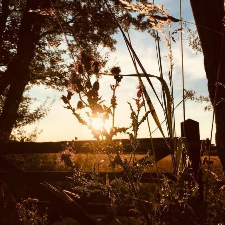Sunset and Thistles, Gabriels Farm Camping and Carvanning Site in Kent